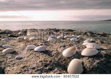 Sea Shells on a rock
