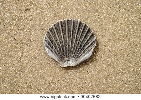 Clamshell On The Beach