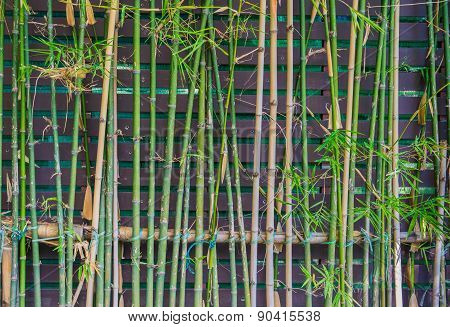 Bamboo Fences In Rural Areas