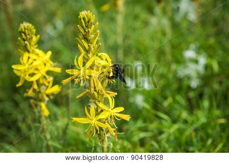 Insect Collecting Pollen On A Yellow Flower