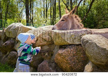 Twins Feeding A Hungry Donkey