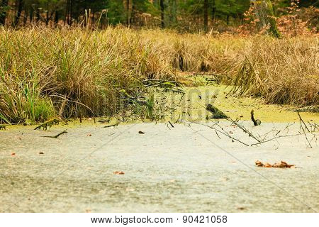 Forest Swamp Landscape