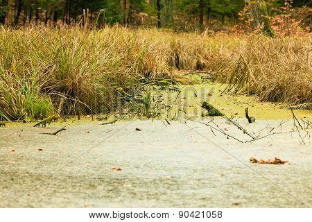 Forest Swamp Landscape