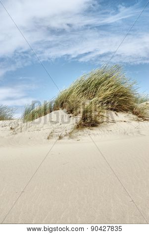 Dunes At The Baltic Sea