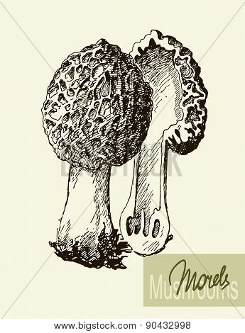 Set of linear drawing mushrooms, vintage vector illustration. Morel mushrooms