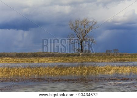 Lonely Tree In The Middle Of Swamps On The Background Of Stormy Skies