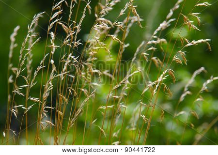 Dry Grass On A Green Background