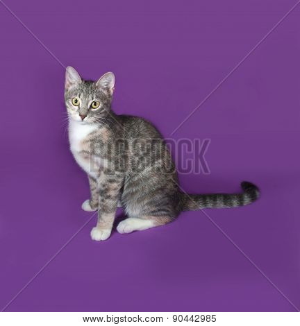 Tricolor Striped Cat Sitting On Lilac