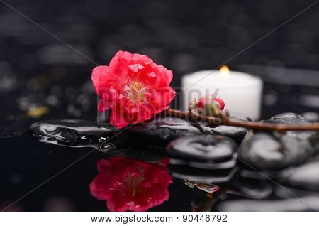 Still life with red cherry blossom with white candle on black stones