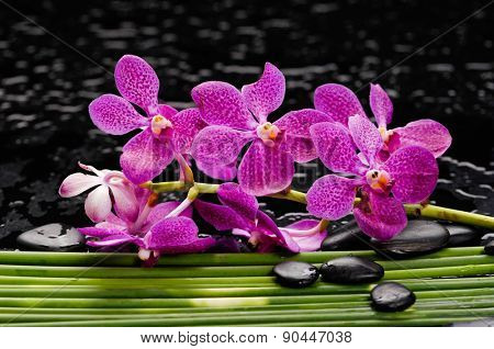 spa concept- lying down pink orchid on long plant