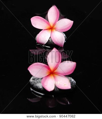 Zen wet stones and two frangipani