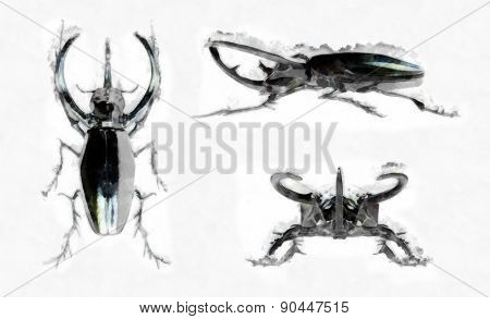 black rhinoceros beetle watercolor drawing
