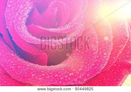 Rose and water droplets image with vintage effect added