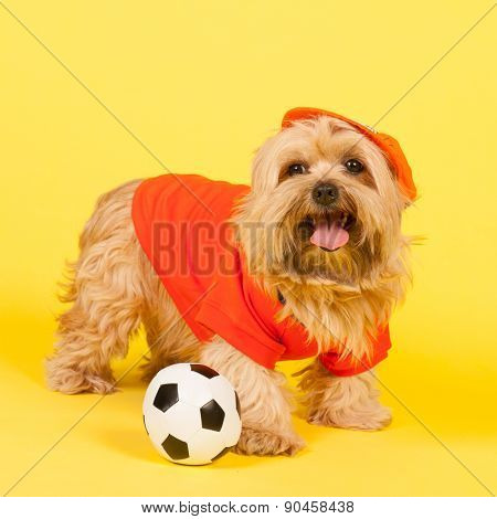 Dutch dog in orange as soccer player