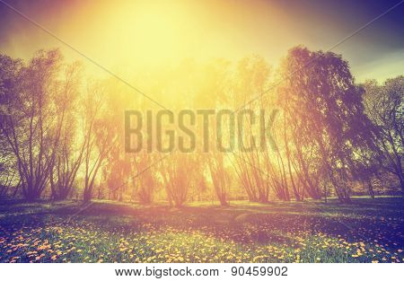 Vintage nature countryside. Spring sunny park, trees and dandelions