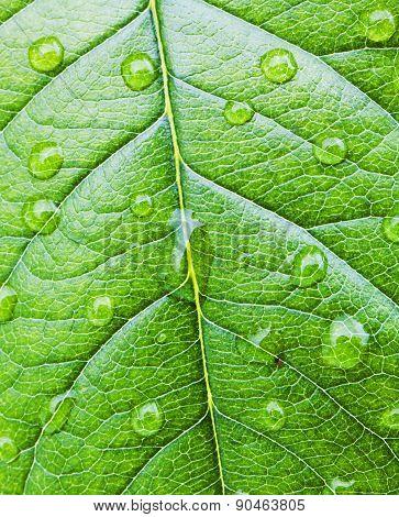 Water droplets on leaf