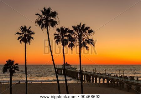 Palm trees and Pier at Manhattan Beach in Los Angeles at sunset.
