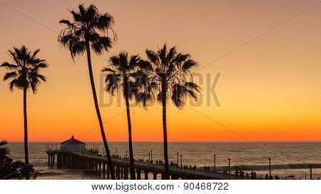 The Palm trees and Manhattan Beach Pier under a beautiful sunset