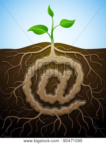 Email Sign As Root Of Plant