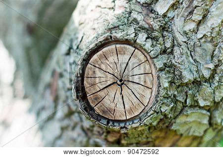 Stump of tree felled - section trunk with annual rings. Abstract texture trees knag, crack wood anci