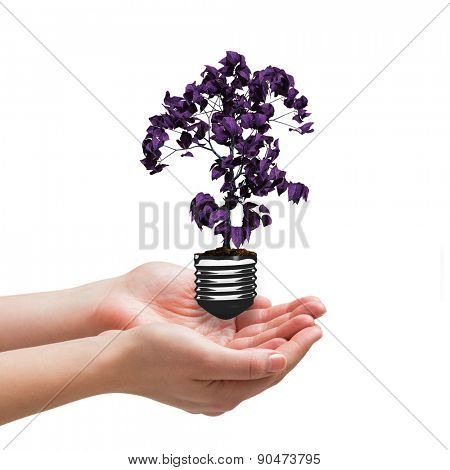 Hands presenting against empty light bulb