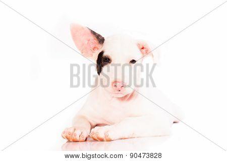 A cute lover puppy dog.