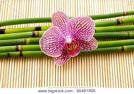 Macro of orchid with bamboo grove on mat