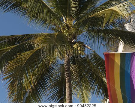 Palm tree and rainbow flag