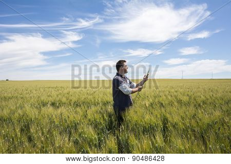 Farmer  Is Checking  The Harvest Quality Wheat