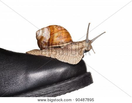 Snail Riding Boot