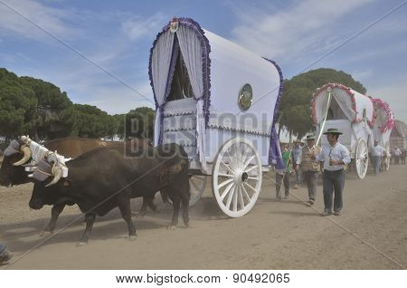 Ox Carts In The Way To El Rocio