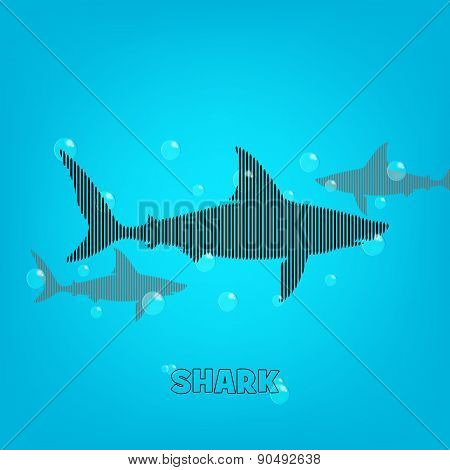 Shark Background