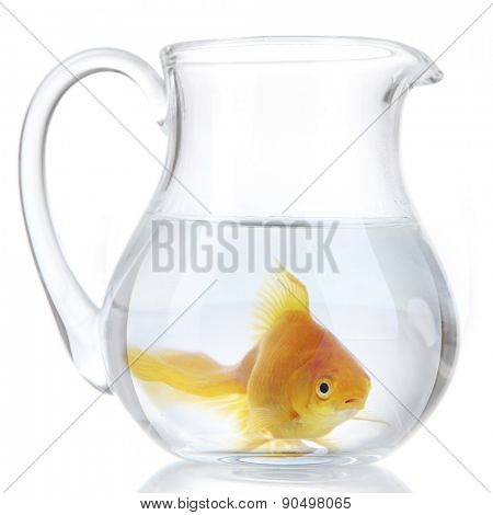 Goldfish in glass pitcher, isolated on white