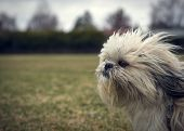 foto of wind blown  - A cute long - JPG