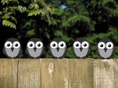 picture of bird fence  - Flock of comical birds perched on a timber garden fence against a foliage background - JPG
