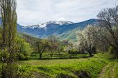 stock photo of snow capped mountains  - Meadow and fruit trees on the background of snow - JPG