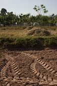 picture of track field  - dry paddy field with tracks from tractor - JPG