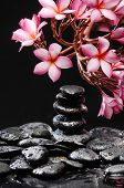 picture of frangipani  - frangipani with stacked black wet stones - JPG