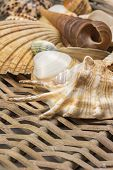 image of oblique  - Different kinds of seashells are lying in the lower side of wicker baket - JPG