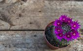 image of cactus  - Beautiful violet blooming cactus on wooden background - JPG