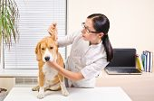 picture of vet  - Vet examines the dog - JPG