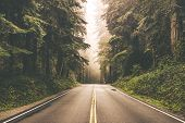 stock photo of redwood forest  - Foggy Straight Redwood Highway in Northern California United States - JPG