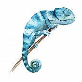 stock photo of chameleon  - Beautiful vector image with nice watercolor chameleon - JPG