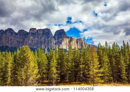 Beautiful nature of the Rocky Mountains of Canada. Evergreen coniferous forests, majestic mountains and the turned yellow autumn bushes