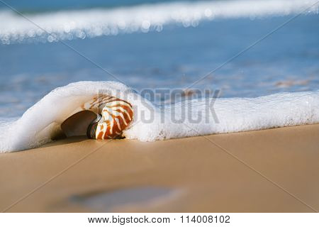 seashell under sea wave on beach, live action