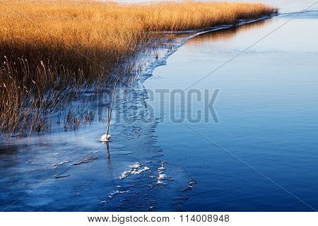 First Ice At The Lake Shore, Golden Reeds Beside The Blue Water, Copy Space