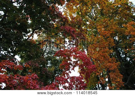 miscellaneous colors of trees in autumn