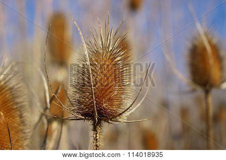 Sharp Dried Plants