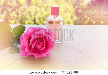 Single Pink Rose Inconcept Sweet Aroma Love In Romantic Colour Tone