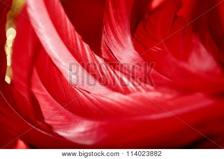 beautiful red feathers macro texture